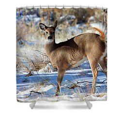 Shower Curtain featuring the photograph Fancy Pants by Jim Garrison