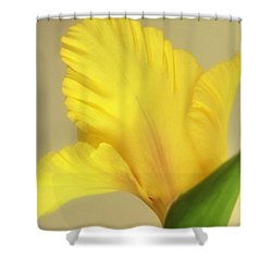 Fanning Glady Shower Curtain