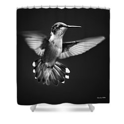 Fantail Hummingbird Shower Curtain