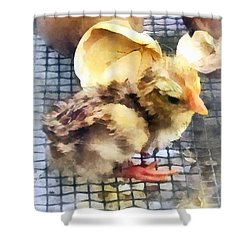 Farm Animals - Just Hatched Shower Curtain by Susan Savad
