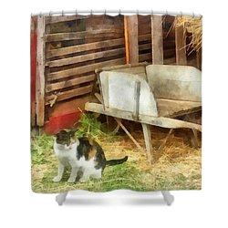 Farm Cat Shower Curtain by Susan Savad