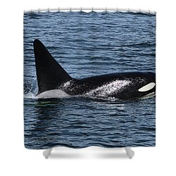 Fat Fin Aka Ca171b Shower Curtain