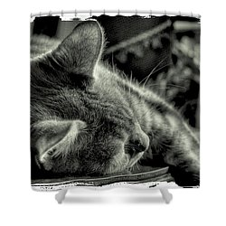 Fatigued Feline Shower Curtain by David Patterson