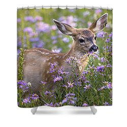 Fawn In Asters Shower Curtain