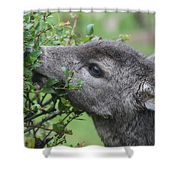 Fawn In The Rain Shower Curtain