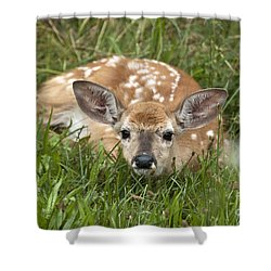 Shower Curtain featuring the photograph Fawn by Jeannette Hunt