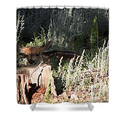 Fawn Front Yard Divide Co Shower Curtain