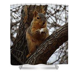 Feasting On Fish Fox Squirrel Shower Curtain by Sara  Raber