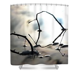 Feather And Branches Shower Curtain by Jane Ford