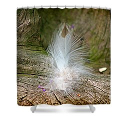 Feather Shower Curtain by Karen Adams