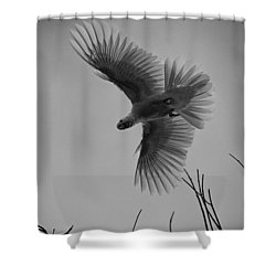 Feathered Flight  Shower Curtain by Douglas Barnard