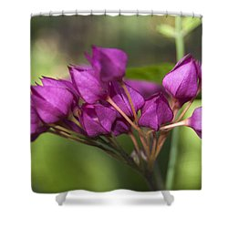 February Color Shower Curtain by Penny Lisowski