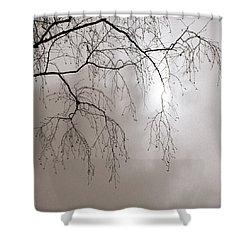 February Sun - Featured 3 Shower Curtain by Alexander Senin