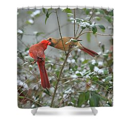 Feeding Cardinals Shower Curtain by Geraldine DeBoer