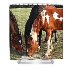 Shower Curtain featuring the photograph Feeding Horses by Cathy Harper
