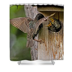 Feeding Starlings Shower Curtain by Torbjorn Swenelius