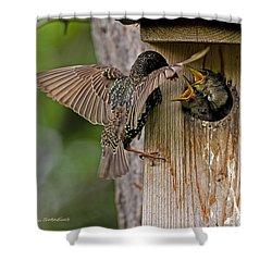Feeding Starlings Shower Curtain