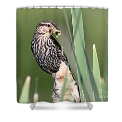 Shower Curtain featuring the photograph Feeding Time by Anita Oakley