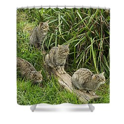 Feeding Time Shower Curtain by Louise Heusinkveld