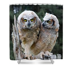 Feeling A Little Grumpy Are We? Shower Curtain by Barbara McMahon