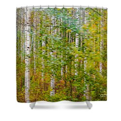 Feels Like Autumn In A Forest Of Birch Trees Shower Curtain