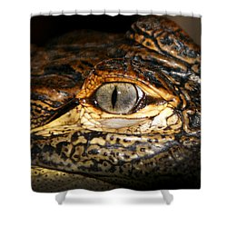 Feisty Gator Shower Curtain