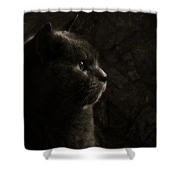 Feline Perfection Shower Curtain by Laura Melis