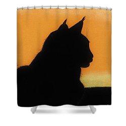 Feline - Sunset Shower Curtain