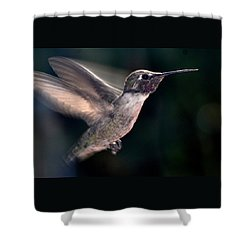Shower Curtain featuring the photograph Male Anna In Flight by Jay Milo