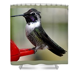 Shower Curtain featuring the photograph Male Anna On Feeder Perch Posing by Jay Milo