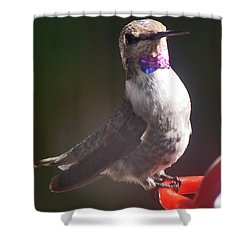 Shower Curtain featuring the photograph Female Anna On Perch by Jay Milo