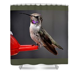 Shower Curtain featuring the photograph Female Anna's Hummingbird On Perch Posing For Her Supper by Jay Milo