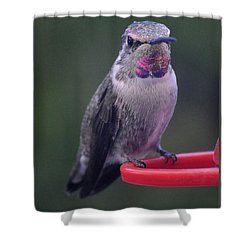 Shower Curtain featuring the photograph Female Anna Posing For Cameraman by Jay Milo