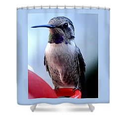 Shower Curtain featuring the photograph Female Anna With Purple Blue Throat by Jay Milo