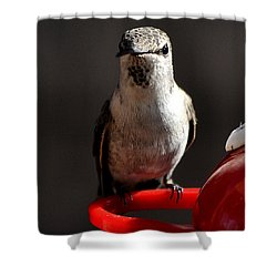 Shower Curtain featuring the photograph Female Anna Hummingbird by Jay Milo