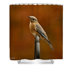 Shower Curtain featuring the photograph Female Bluebird by Robert L Jackson