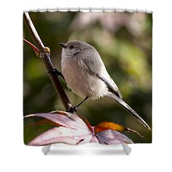 Female Bushtit Shower Curtain by Betty Depee