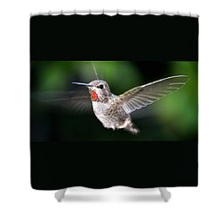 Shower Curtain featuring the photograph Female Caliope Hummingbird In Flight by Jay Milo