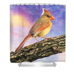 Female Cardinal Away From Sun Shower Curtain