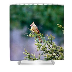 Shower Curtain featuring the photograph Female Cardinal In Snow by Eleanor Abramson
