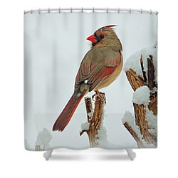 Female Cardinal In The Snow Shower Curtain by Sandy Keeton