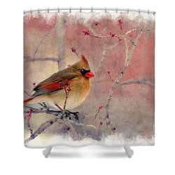 Female Cardinal Portrait Shower Curtain