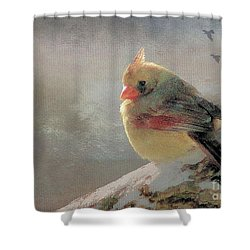 Female Cardinal V Shower Curtain by Janette Boyd