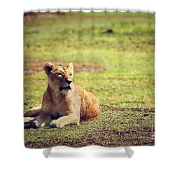 Female Lion Lying. Ngorongoro In Tanzania Shower Curtain by Michal Bednarek
