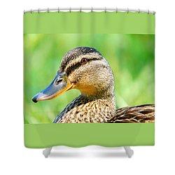 Female Mallard Shower Curtain