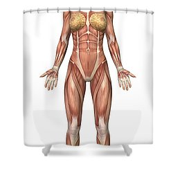 Female Muscular System, Front View Shower Curtain by Stocktrek Images