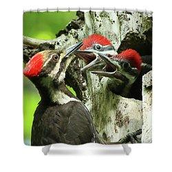 Female Pileated Woodpecker At Nest Shower Curtain by Mircea Costina Photography