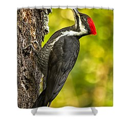 Female Pileated Woodpecker No. 2 Shower Curtain