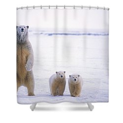 Female Polar Bear Standing With Her Two Shower Curtain