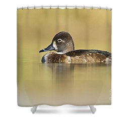 Shower Curtain featuring the photograph Female Ring Necked Duck by Bryan Keil